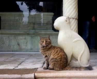 A_Persian_Cat_beside_Naser_al-Din_Shah_gravestone2