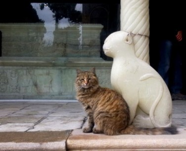 A_Persian_Cat_beside_Naser_al-Din_Shah_gravestone2