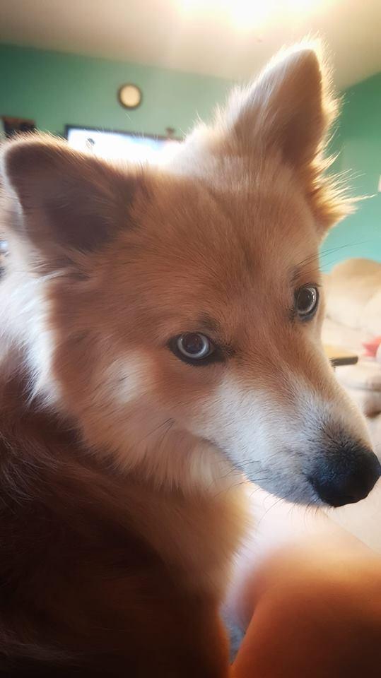 Shana Scott's dog Howl
